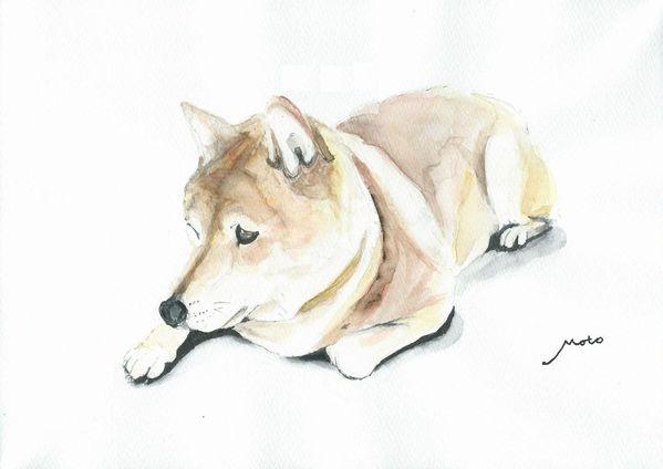 たたずむ・柴犬