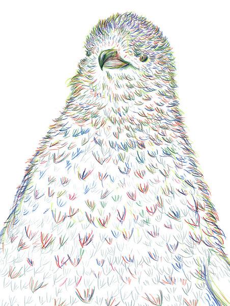 ふさふさのペンギン