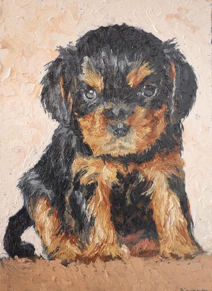 ヨークシャーテリア 仔犬#196