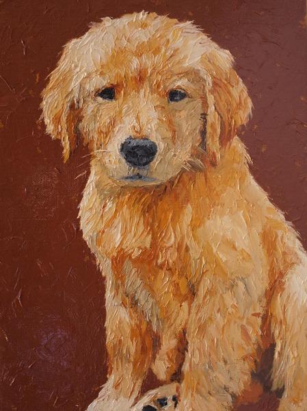 ゴールデンレトリバー 仔犬#222