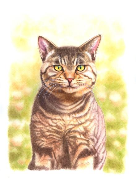 キジトラ猫・1