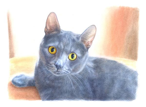 グレー猫・1