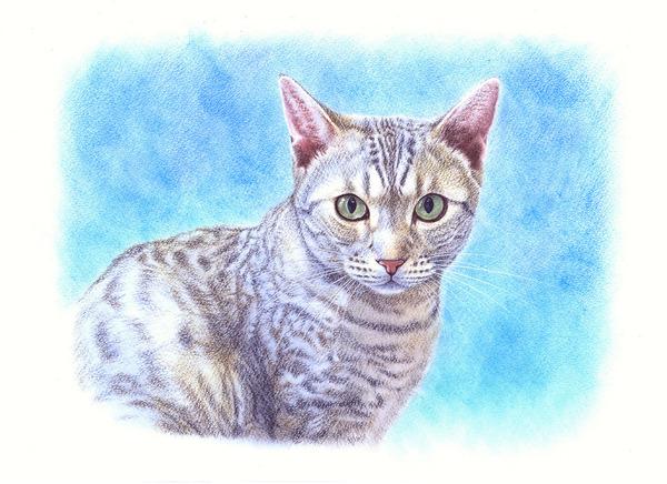 サバトラ猫・1