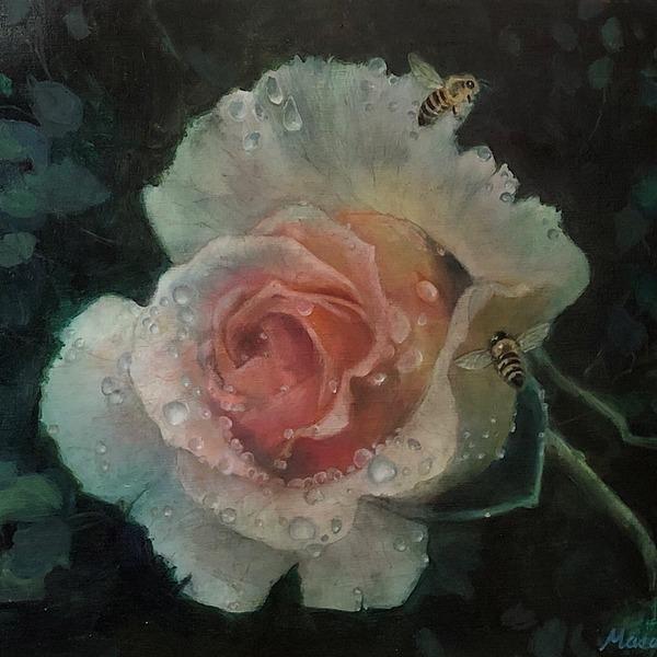 薔薇と水滴