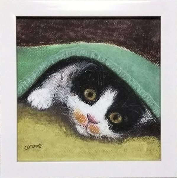 毛布から顔出す猫