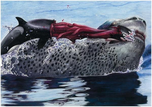 white killer whales