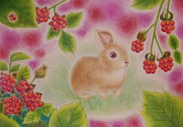 木苺とうさぎ
