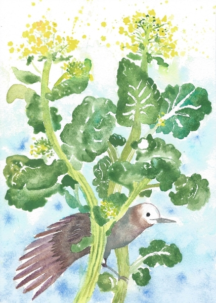 菜花と小椋鳥