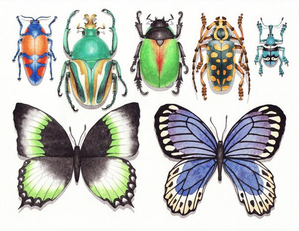 昆虫標本 2