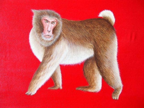 猿 2016