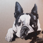 「Boston Terrier」